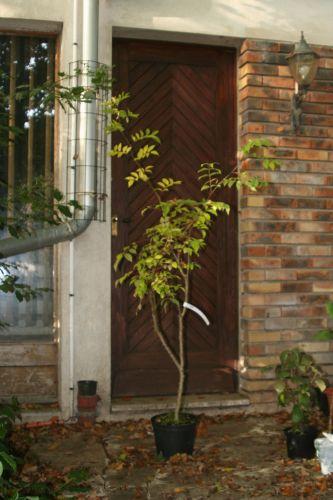 arbofolia 9 oct 2010 116.jpg