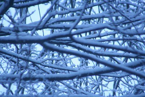 veneux branches 10 février 039.jpg