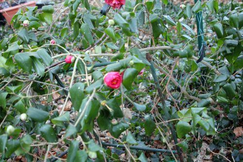 gloire 3 veneux 3 fev 2012 007.jpg