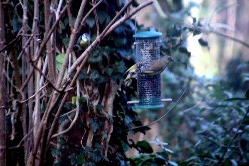 oiseaux 17 déc 2011 008.jpg