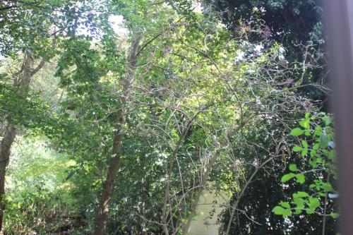 palmensis veneux 31 août 2016 001.jpg