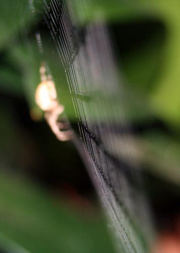 araignée toile 21 oct 027.jpg