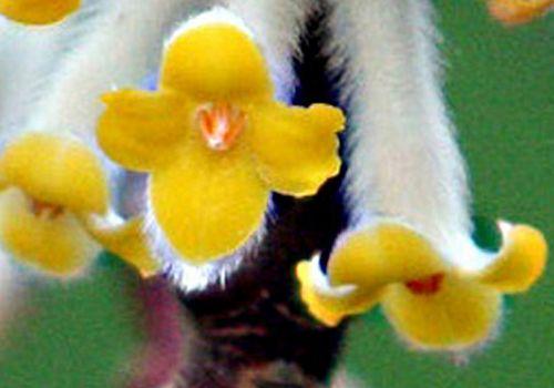 9 edge fleur 1 paris 27 fev 2011 pp 261.jpg