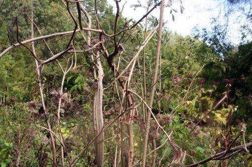 monstrosa tige romi 3 oct 2010 030.jpg