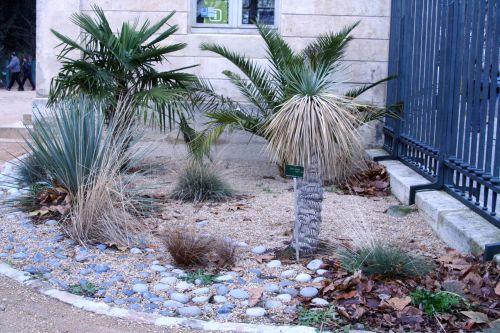Plantes sureaux for Plante exotique exterieur rustique