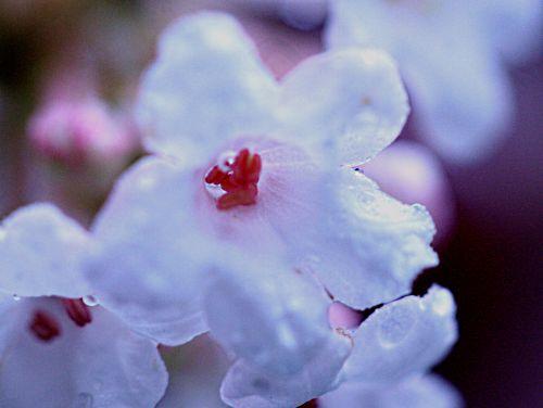 bodnan fleur pp 9 dec 015.jpg