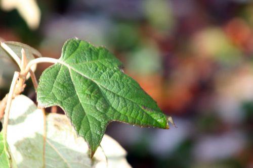 feuilles harmony 3 veneux 14 janvier 025.jpg