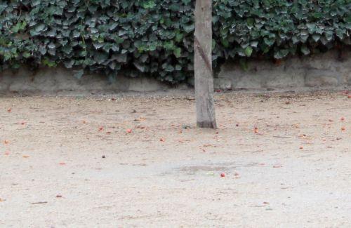 evereste sol paris 4 déc 2011 079.jpg