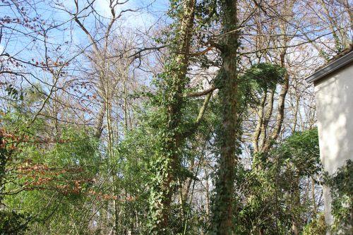 bambous veneux 7 fev 2014 024 (2).jpg
