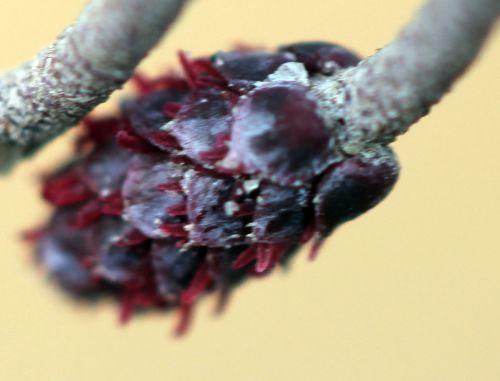 fem 3 stig sorques 20 mars 2012 018.jpg