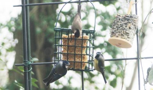 10 oiseaux veneux 14 dec 2015 008.jpg