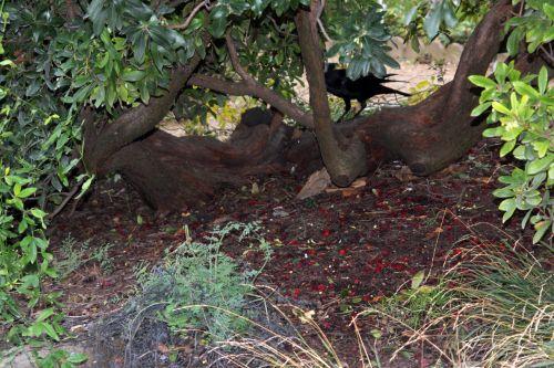 2 arbutus paris 4 déc 2011 072.jpg