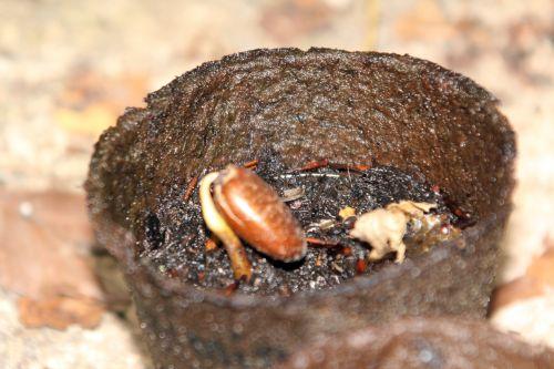 semis asimina veneux 23 août 2012 011.jpg