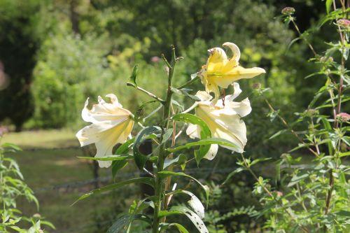 5 romilly 29 juil 2012 034.jpg