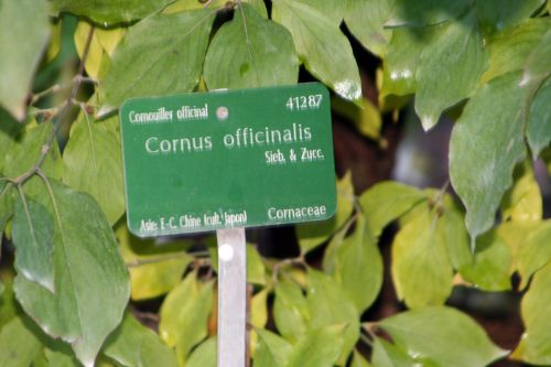 11 cornus off paris 30 oct 2010 030.jpg