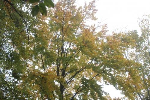 1 arbres veneux 15 nov 2017 002.jpg