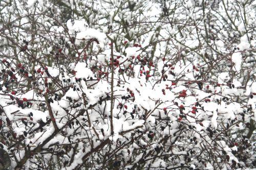 neiges cyno 20 déc 2010 064.jpg