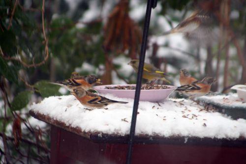 oiseaux dessus 19 déc 2010 037.jpg