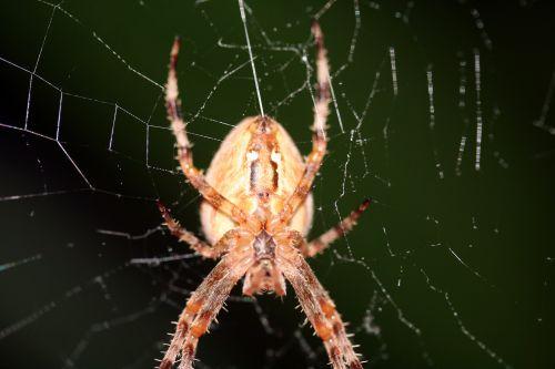 araignée fil 1 21 oct 023.jpg
