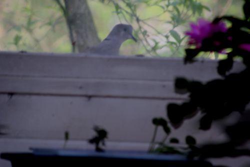 fenêtre veneux 27 mars 2014 032.jpg