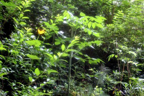 1 dahlia veneux 24 juin 2012 014.jpg