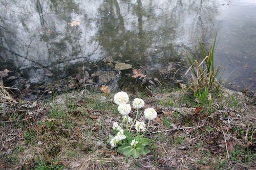 gb 9 avril 2012 203.jpg