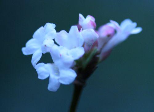 vib far fleurs 22 dec 016.jpg