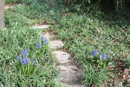 3 jacinthes veneux 14 mars 2016 032.jpg