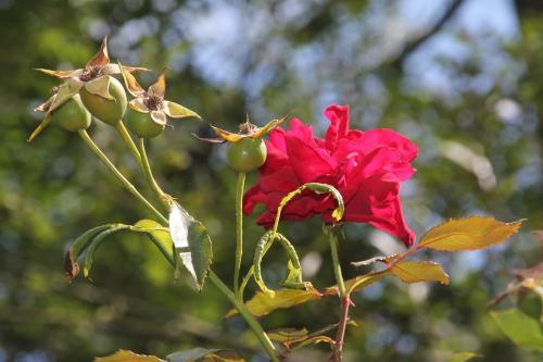 4 red parfum romi 6 sept 2015 011 (1).jpg