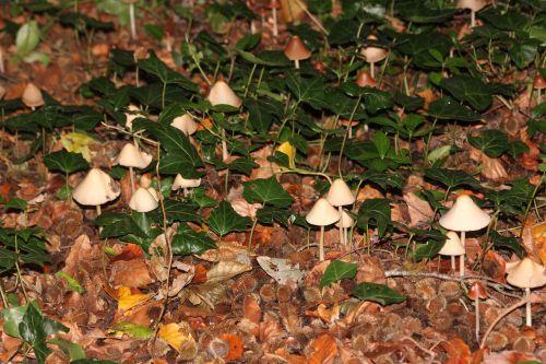 champignons 12 oct 2014 001 (2).jpg