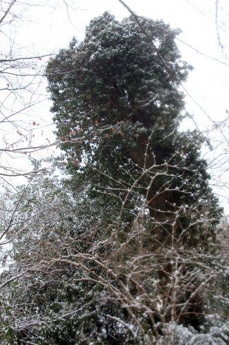 9 HLM neige 19 janvier 2013 010.jpg