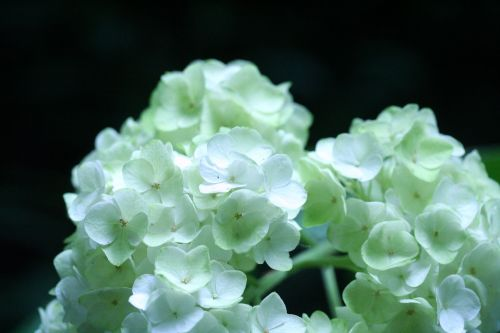 harmony fleurs veneux 25 juil 2010 008.jpg