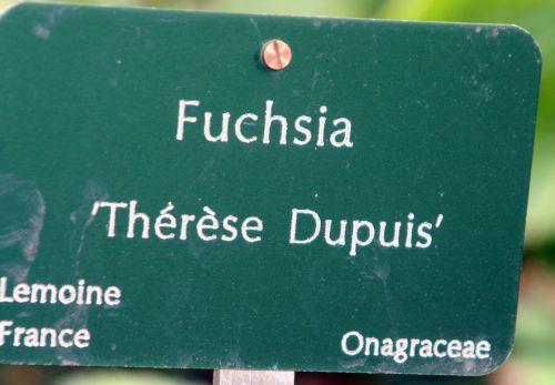 3 fuchsia thérèse dupuis paris 26 sept  2010 073.jpg