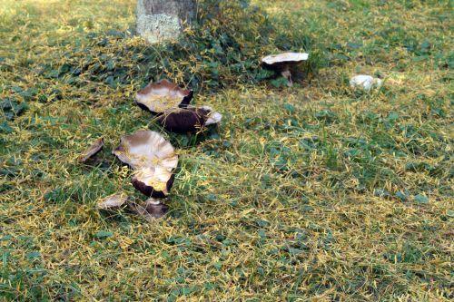 arbofolia 9 oct 2010 055.jpg