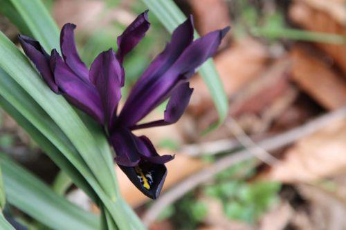 iris veneux 7 fev 2014 004 (1).jpg