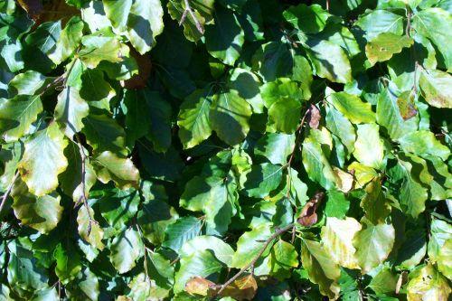 verzy feuilles barres 11 oct 040.jpg
