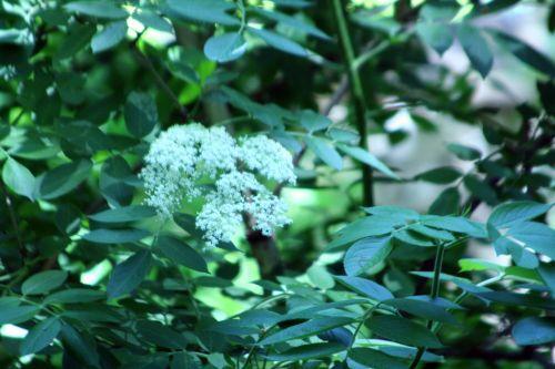 palmensis veneux 24 mai 004.jpg