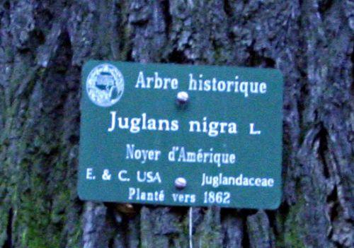 juglans nigra étiquette paint paris 15 dec 121.jpg