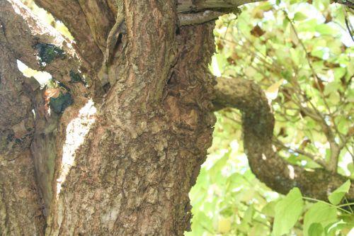 cat arbofolia 9 oct 2010 040.jpg