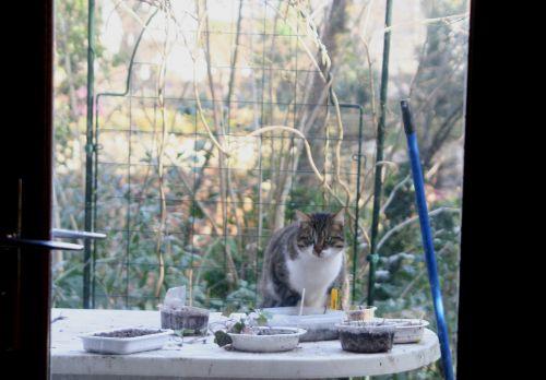 chat gr27 janvier 085.jpg