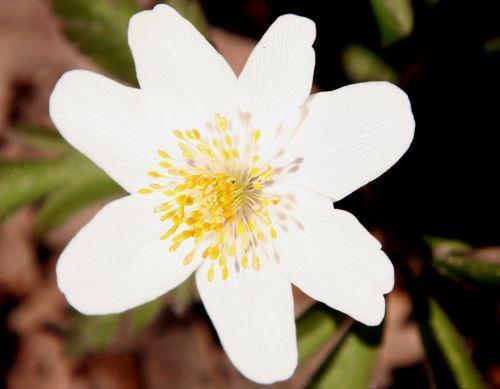 10 anemone nemo 24 mars 2011 013.jpg