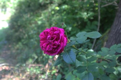 falstaff romi 30 août 2015 001 (1).jpg
