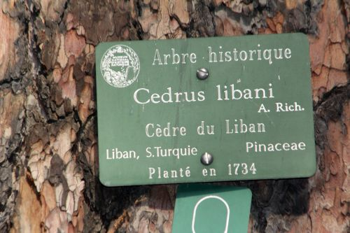 9 cedrus libani paris 24 sept 2011 057.jpg