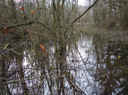 arbres eau romi 9 jan 035.jpg