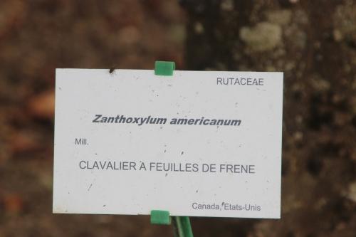 7 zantho americanum marnay 11 sept 2016 031.jpg