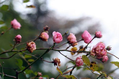 rosa kahn 13 dec 047.jpg