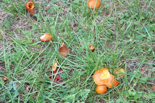 arbofolia 9 oct 2010 079.jpg