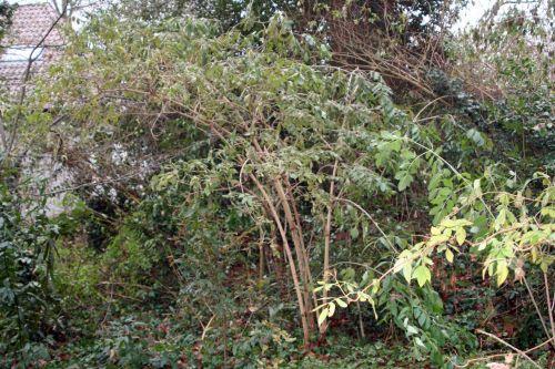 palmensis veneux 11 déc 2010 015.jpg
