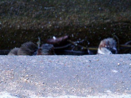 bain paris 23 mars 114.jpg