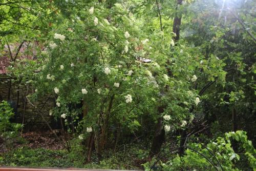 6 palmensis veneux 23 mai 2016 001.jpg